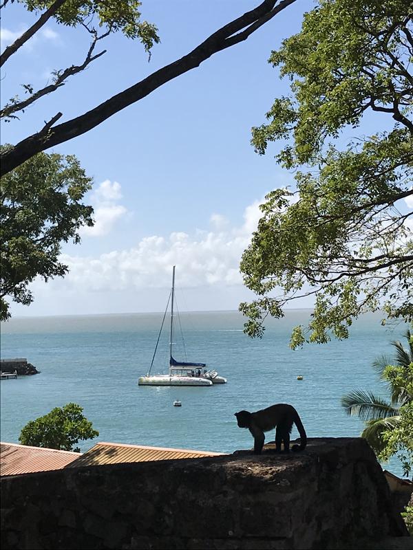 Iles du Salut - French Guiana - Tropic Alizés